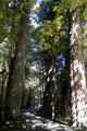 Kanada_British Columbia_Vancouver Island_Goldstream Park_Enge Kiste
