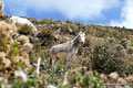 Bolivien_Titicacasee_Isla del Sol - Esel
