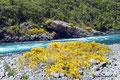 Chile_Vicente Peréz Rosales NP_Fluss Petrohué1