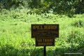 Guatemala_Norden_Tikal_Falls Müll weggeschmissen wird kommt Kroko