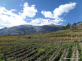 Peru_Cordillera Blanca_Durch Felder