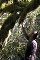 Kanada_British Columbia_Vancouver Island_Little Qualicum Falls PP_Überall Moosteppiche