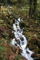 USA_Oregon_Columbia River Gorge National Scenic Area_Im Wald