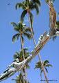 Mexiko_Pazifikküste Nord_Puerto Vallarta_Fliegende Meeresbewohner