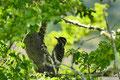 Chile_Carretera Austral_Cochrane_Reserva National Tamango_Specht