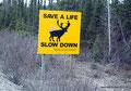 Kanada_Labrador_Nicht rasen