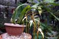 Costa Rica_Paraíso_Botanischer Garten Lankester5