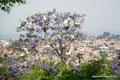 Mexiko_Hochland_San Miguel de Allende_Pausenloses Gezänke