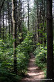 Kanada_Ontario_Rattlesnake Point_Waldweg