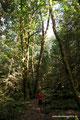 Kanada_British Columbia_Alice Lake PP_Ein Vorgeschmack auf Regenwald