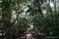 Panama_Panama-Stadt_Nationalpark Metropolitano1