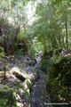 Chile_Cochamó_Valle de Cochamó_Unterwegs im Valdivianischen Regenwald2