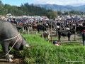Ecuador_Otavalo_Auf dem Tiermarkt1