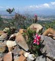 Kolumbien_Villa de Leyva_Tolle Wanderung auf ein Hochplateau1