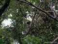 Costa Rica_Monteverde_Curi-Cancha Reserve_Fischertukan2