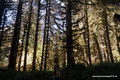 USA_Washington_Olympic NP_Regenwald am Hoh River10