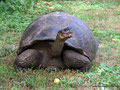 Ecuador_Galapagos_Isla Santa Cruz_Galapagos-Schildkröte6