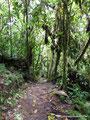 Ecuador_Mindo_Tarabita Park1