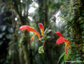 Costa Rica_Santa Elena NP_Nebelwald7