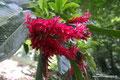 Mexiko_Oaxaca und Chiapas_Prächtige Fraben am Misol-Há Wasserfall