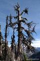 USA_Washington_Nordkaskaden NP_Maple Pass Trail_Grün-Blau