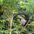 Costa Rica_Palo Verde NP_Reiher2