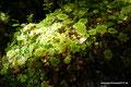 Chile_Cochamó_Valle de Cochamó_Unterwegs im Valdivianischen Regenwald8