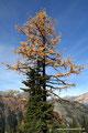 USA_Washington_Nordkaskaden NP_Maple Pass Trail_Gelb-Grün