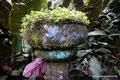 Mexiko_Zentrale Atlantikküste und Puebla_Xilitla_Edward James skurriles Monument im Dschungel7