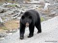 Kanada_Labrador_Begegnung der besonderen Art6