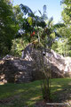 Guatemala_Norden_Yaxhá NP_Erster Tempel