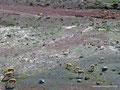 Ecuador_Vikunjas am Vulkan Chimborazo1