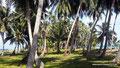 Panama_El Porvenir_Palmenhain