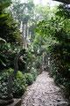 Mexiko_Zentrale Atlantikküste und Puebla_Xilitla_Edward James skurriles Monument im Dschungel19