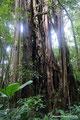 Costa Rica_Monteverde_Curi-Cancha Reserve_Wald2