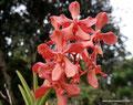 Costa Rica_Paraíso_Botanischer Garten Lankester3