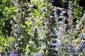 Kanada_Ontario_Niagara Glen_Blütenzauber