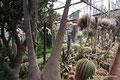 Mexiko_Zentrale Atlantikküste und Puebla_Cadereyta de Montes_Besuch in der Quinta Fernando Schmoll1