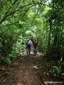 Costa Rica_Monteverde_Curi-Cancha Reserve_Wald5