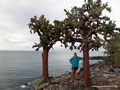 Ecuador_Galapagos_Isla Santa Fe_Am Kaktus