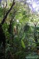 Costa Rica_Santa Elena NP_Nebelwald6