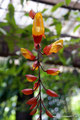 Guatemala_Osten_Orquigonia Orchideenfarm3