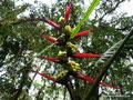 Ecuador_Mindo_Im Regenwald3