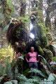 USA_Washington_Olympic NP_Regenwald am Hoh River13