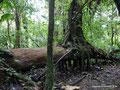 Costa Rica_Santa Elena NP_Nebelwald22