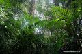 Costa Rica_Carara NP_Regenwald