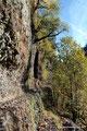 USA_Oregon_Columbia River Gorge National Scenic Area_Eagle Creek Trail1