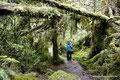 Chile_Carretera Austral_Queulat NP_Im Wald3