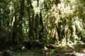 Chile_Cochamó_Valle de Cochamó_Unterwegs im Valdivianischen Regenwald11