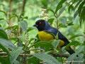 Kolumbien_Valle de Cocora_Schöner Vogel